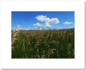 Farm Field1