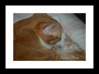 Isn't he cute when he's sleeping?